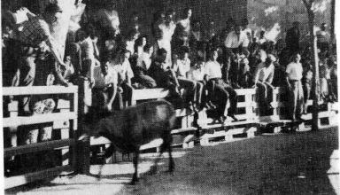 juillet 1956