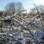 Marsillargues sous la neige